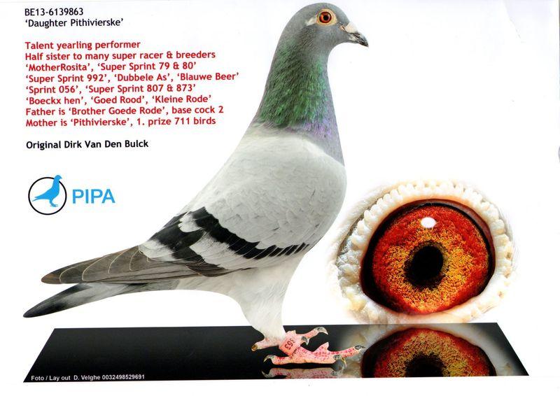 Fci Pigeons Grandprix Mundial Ranking   Autos Post
